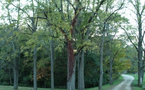 treespath1