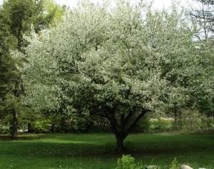 treeBlossoming1